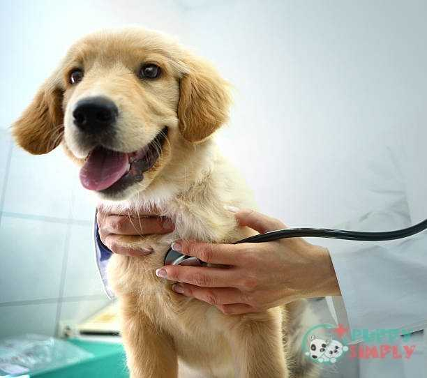 Vet examining a dog. How Much Do Dog X-Rays Cost