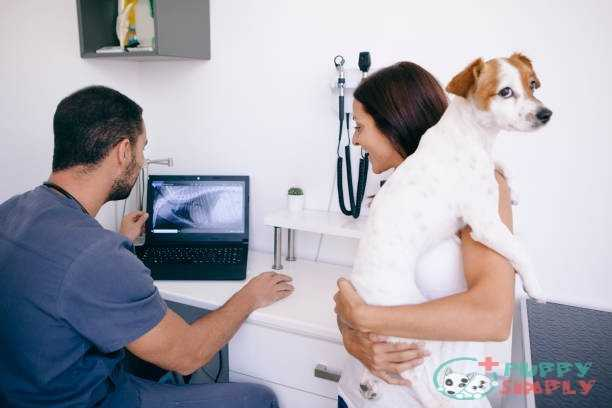 pet owner listening to the radiography results How Much Do Dog X-Rays Cost