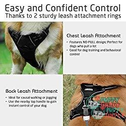 Rabbitgoo Front Range No-pull Harness - Best Dog Harness to Stop Pulling 1
