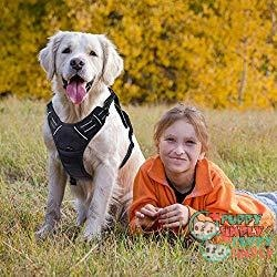 Rabbitgoo Front Range No-pull Harness - Best Dog Harness to Stop Pulling