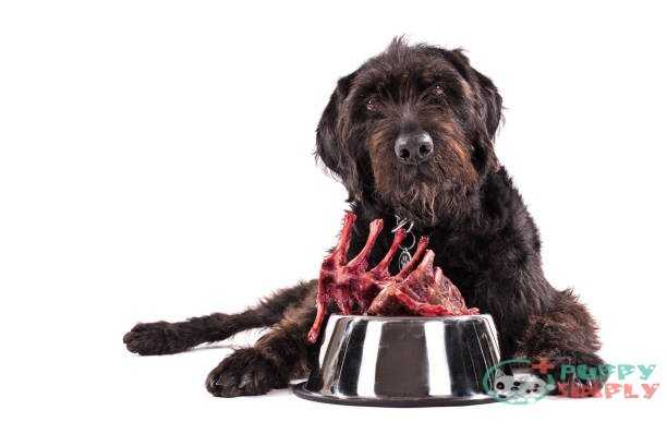 Black dog with bowl full of raw meat isolated on white background best meats for dogs