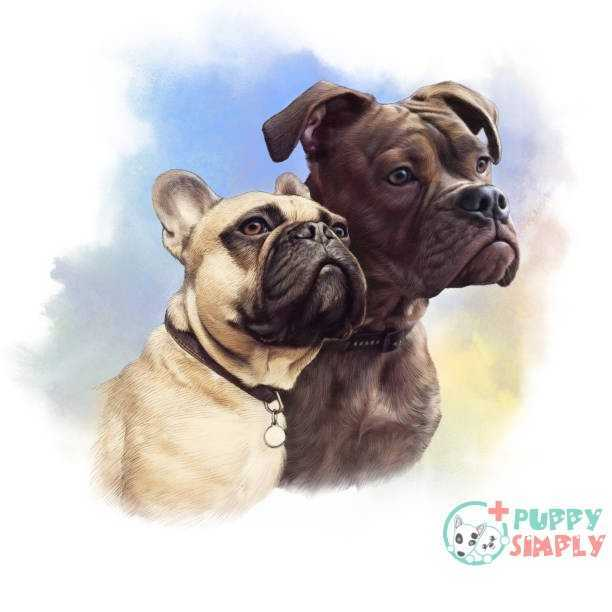 French Bulldog Dogs vector art illustration Boxer Specific Nutritional Problems