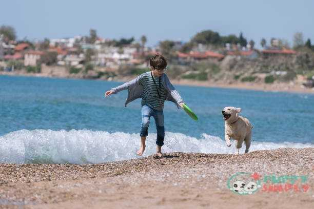 Happy boy running wit her dog on the beach. What You Should Look Out For In A Great Dog Frisbee?