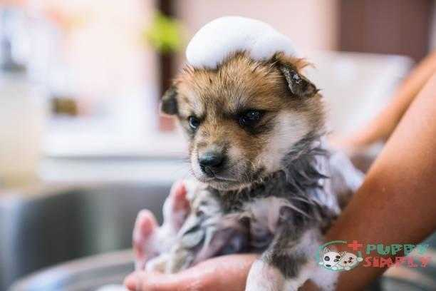 a puppy taking a bath in the kitchen sink - wash your dog s and pictures The Factors That Play A Role In How Often Can You Wash Your Dog
