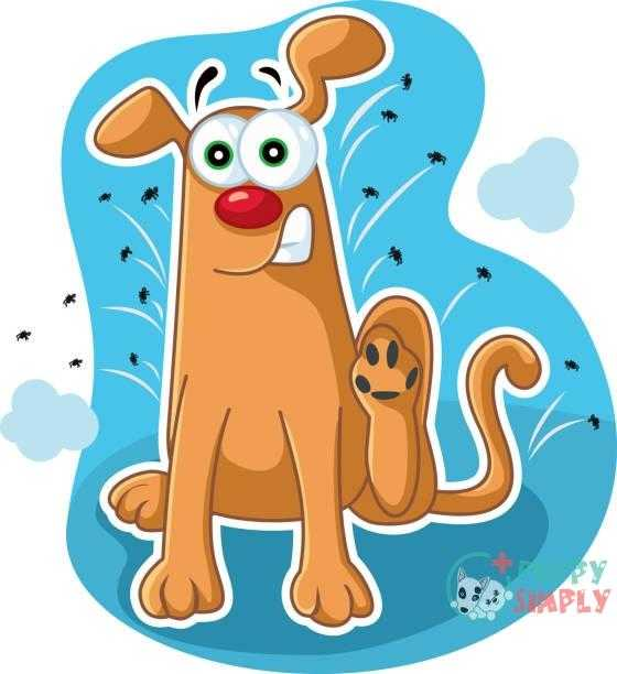 funny dog scratching fleas vector cartoon - flea dogs stock illustrations clip art cartoons & icons Flea Pills For Dogs Versus Current Applications And Collars