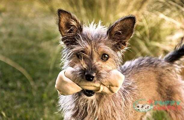 little pet - bones dogs s and pictures Get The Right Kinds Of Bones For Dogs Teeth