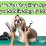 How To Pull A Tick Off A Dog Safely Step By Step