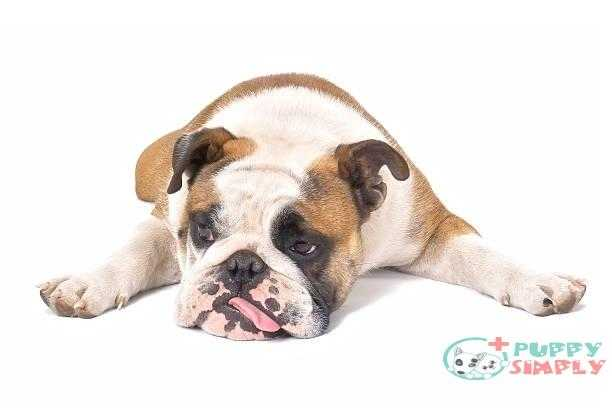 What Causes Liver Disease In Dogs?