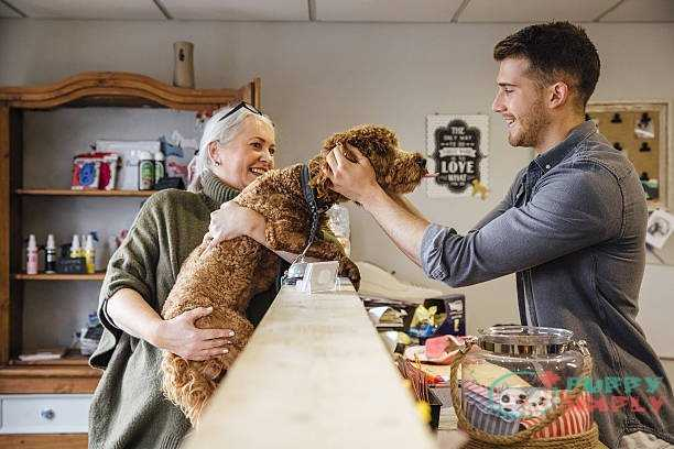 How Much To Tip The Dog Groomer