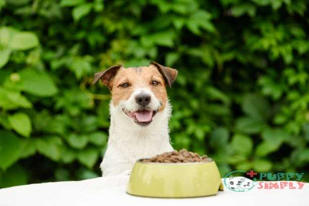 dog behind table with bowl full of dry food - low fat dog food stock pictures royalty-free photos & images best low fat dog food