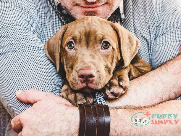 man hugging a young charming puppy. close-up - dog for single man stock pictures royalty-free photos & images best dog for single man