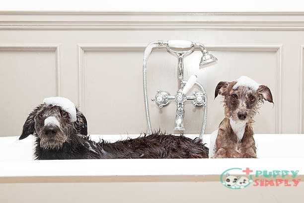 Important Things To Consider When Buying Dog Flea Shampoo