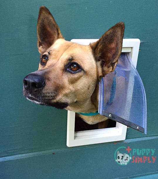 Things To Consider When Choosing The Best Dog Door