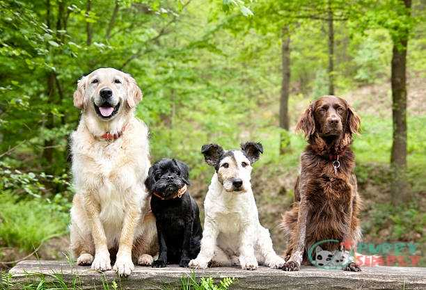 Why Buy A Mixed Dog Breed?