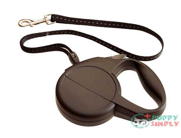 Important Features To Consider When Buying Retractable Dog Leash