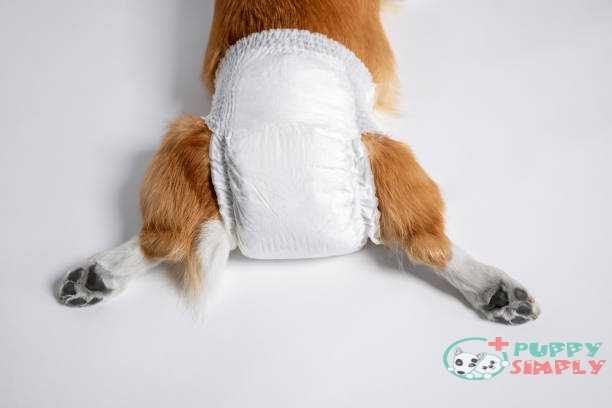 How To Prevent Diaper Rash And Discomfort In Dog Diapers