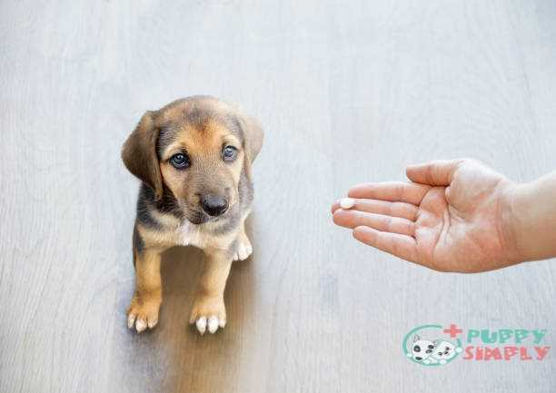 Things To Consider For Choose The Best Joint Supplement For Dogs