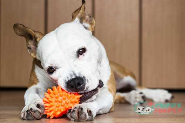 Things To Consider When Buying Indestructible Dog Toys