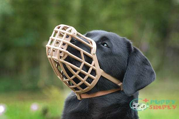 Things To Consider When Buying a Dog Muzzle