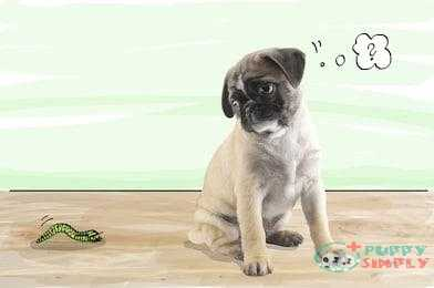 Types of Worms Affecting Dogs