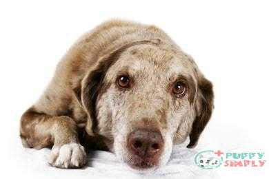 6 Natural Ways To Deworm A Dog