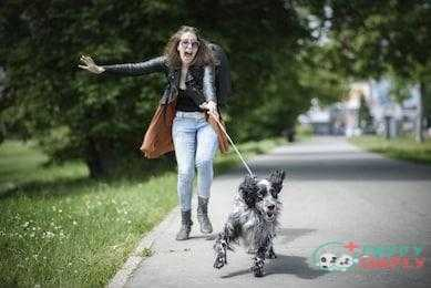 Things To Consider For Getting The Best Dog Leash