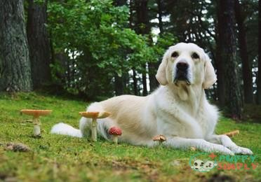 Can Dogs Be Allergic To Mushrooms?