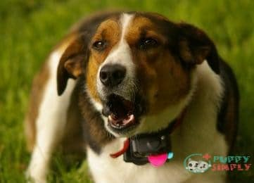 Things to Consider for Find the Best Dog Bark Collar