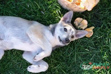 What Are the Signs of Toxic Mushroom Ingestion for Dogs