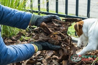 What Types of Mulch Safe for Dogs?