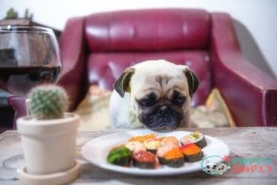 How Much Tuna Can Dogs Eat?