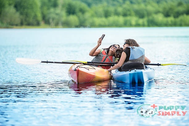 Things to Consider When Buying Dog-friendly Kayaks