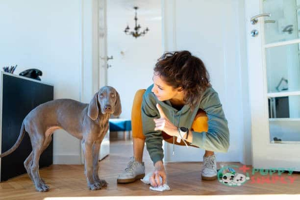 What Are The Signs That A Dog Needs To Poop?