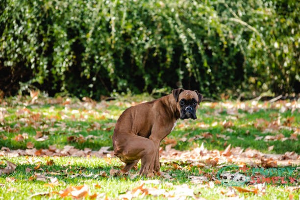 how often do dogs poop and pee
