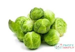 Can Dogs Eat Brussel Sprouts Raw?