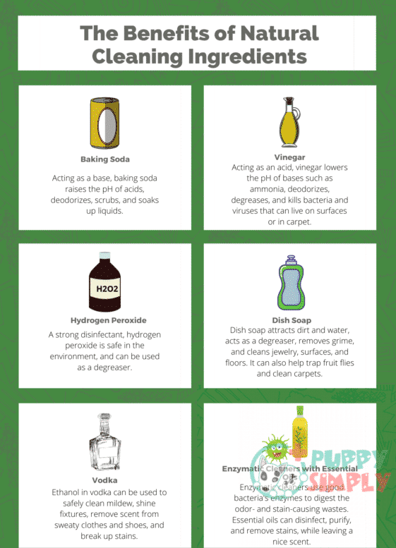 Common Ingredients in Natural Pet Stain and Odor Removal