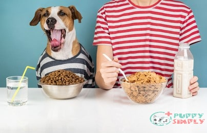 How much food should Pit Bulls eat