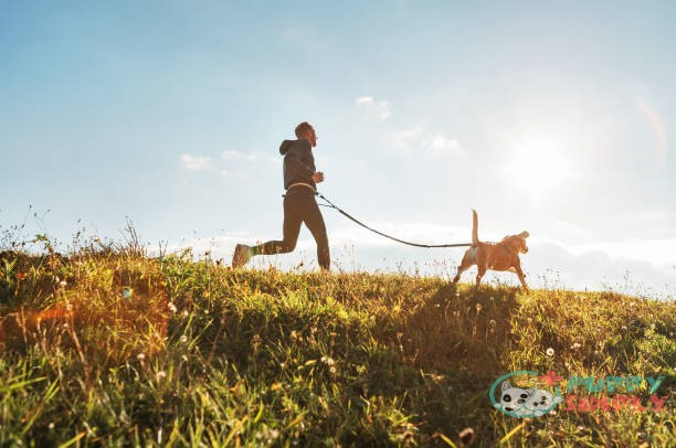 Training Your Dog to Run Fast