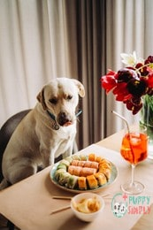 is wasabi bad for dogs