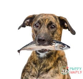Benefits of Fish for Dogs