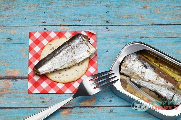 Can Dogs Eat Sardines?