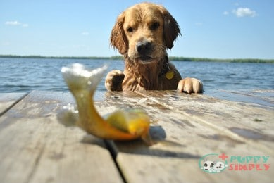 Types of Fish That Aren't Safe for Dogs