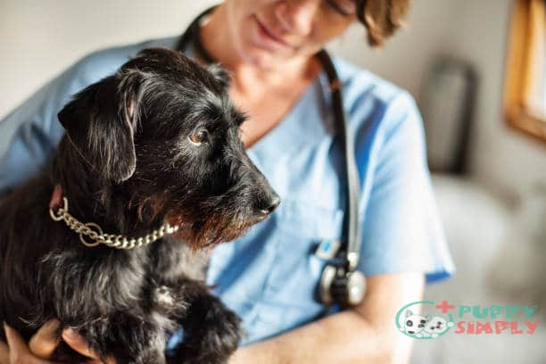 What Do Vets Do for a Dog Who Won't Eat?
