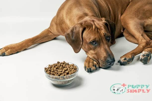 how long can a dog go without eating or drinking