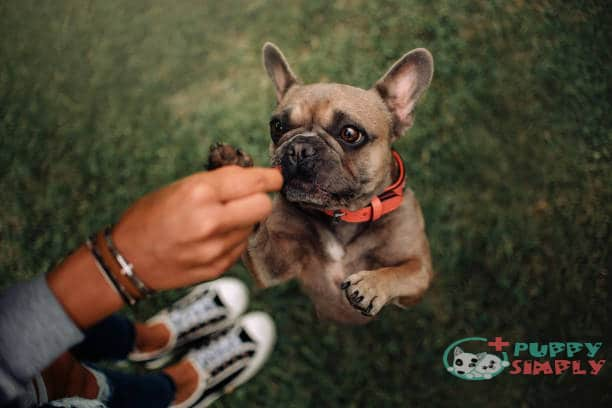 Frenchie's Nutritional Needs