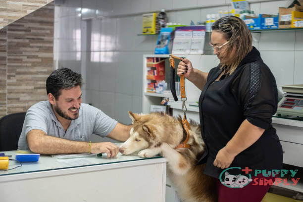 How Much is a Husky Cost When Buying From Pet Stores?