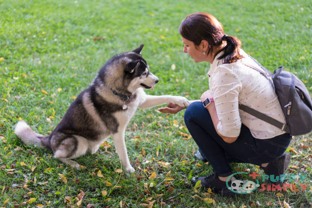 The Cost of Training a Siberian Husky