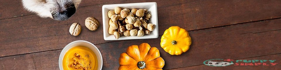 What Are the Health Benefits of Pumpkin for Dogs