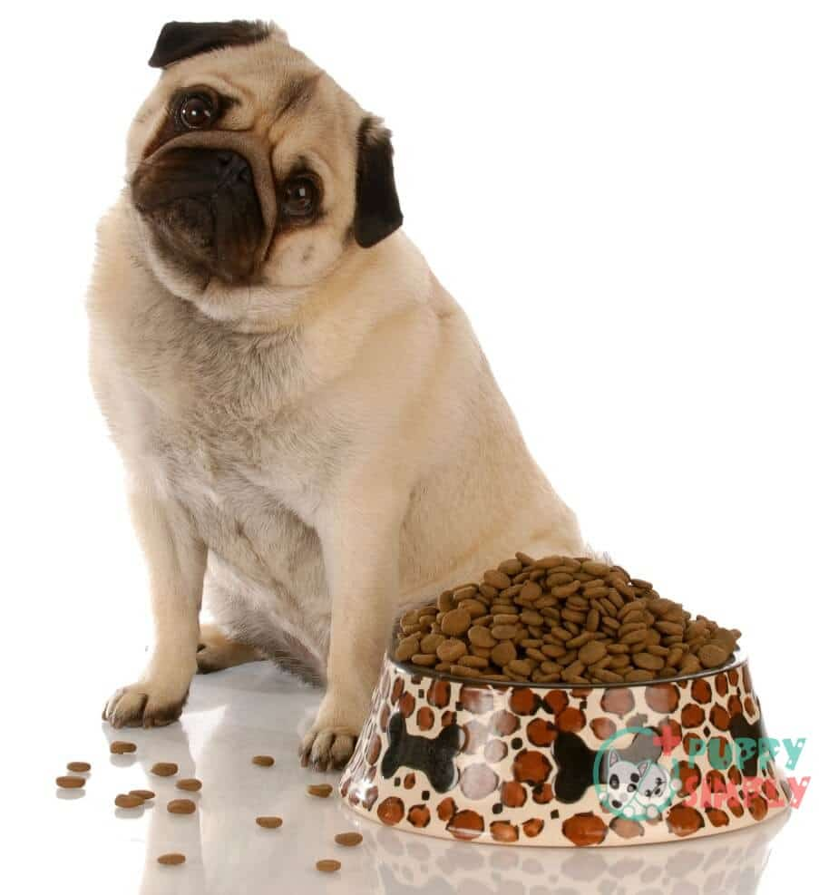 Important Things to Look for in the Best Food for Pugs