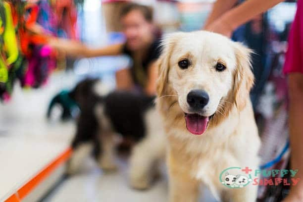 Large Dog-Friendly Retail Stores